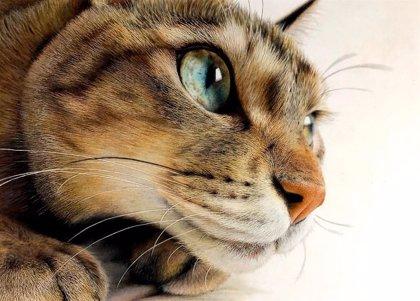 ¿Dibujo o fotografía?: El estudiante de arte Haruki Kudo es experto en dibujar gatos hiperrealistas y sembrar el debate