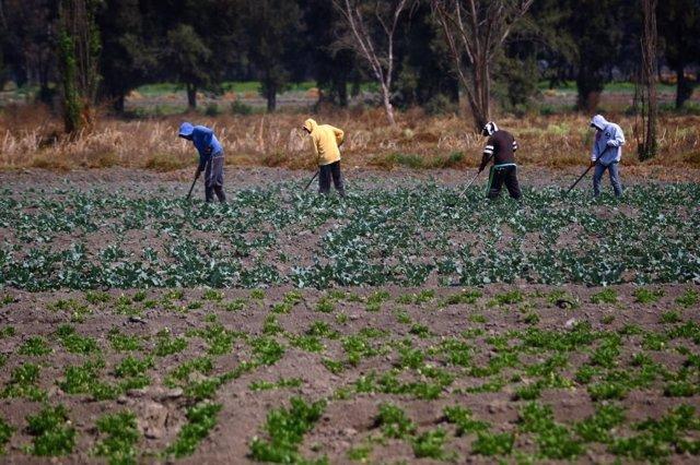 Agricultura Ecuador.