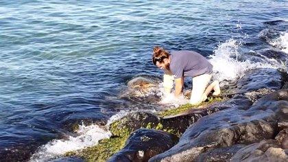 Rescatan a una tortuga marina de un agujero en el que se estaba ahogando