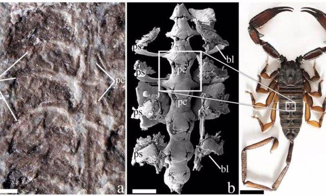 La especie de escorpión más antigua fue pionera en tierra firme