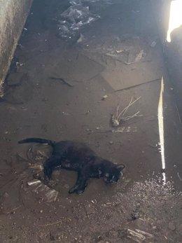 Uno de los gatos envenenados en Peñarroya-Pueblonuevo (Córdoba).