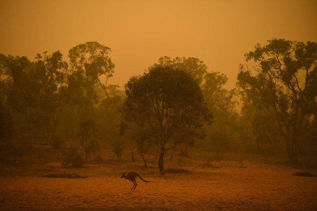 Australia.- Los incendios en Australia devastan casi el 80 por ciento de una reg