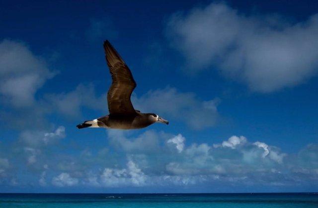 Las áreas protegidas en alta mar deben hacerse móviles