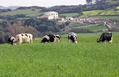Más de 700 granjas lácteas echaron el cierre en España en 2019, según UPA