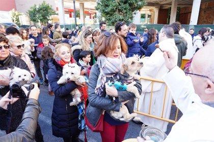 Perros, tortugas, peces y otras mascotas reciben la tradicional bendición de la fiesta de san Antonio Abad en València