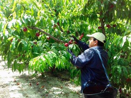 La Asociación de Fruticultores de Extremadura se suma a las movilizaciones del campo extremeño
