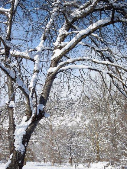 Euskadi registrará una jornada de domingo con precipitaciones y cota de nieve a 500 metros
