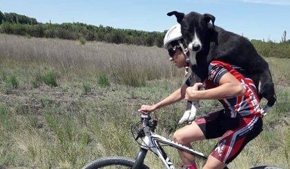 Un grupo de ciclistas rescata a un perro abandonado llevándolo a cuestas hasta ponerlo a salvo