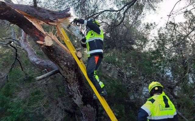 El temporal provoca en Formentera la caída de árboles y otras pequeñas incidencias