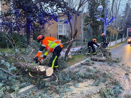 Más de 200 intervenciones en la región por daños ocasionados por el viento