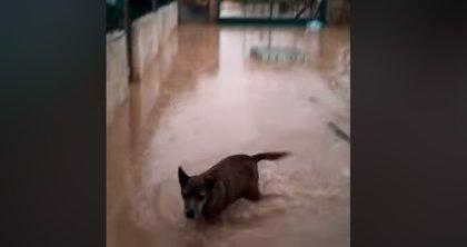 Las lluvias inundan el refugio de la protectora de Xàtiva, que pide casas de acogida para los perros