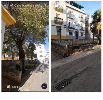 Ecologistas critican al Ayuntamiento de Jaén por la tala de un olmo sexagenenario en el casco antiguo