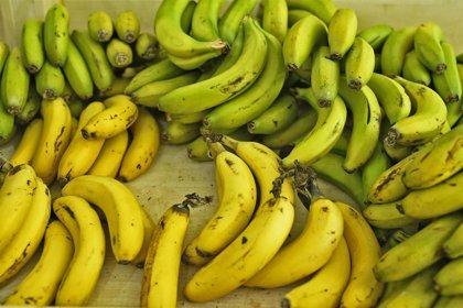 El Estado lleva al Constitucional la ley agroalimentaria canaria por la denominación 'vino de plátano'