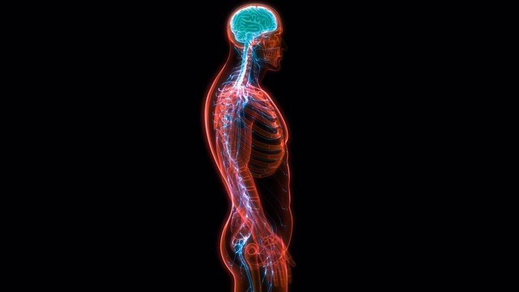 Todo lo que debes conocer sobre el sistema nervioso, el canal de ...