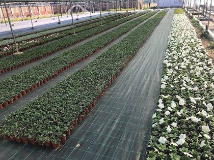 El vivero de la Diputación de Cáceres entregó más de 17.000 árboles y 38.000 plantas a los municipios de la provincia