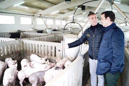 """Domínguez (Cs) señala que el """"cuatripartito"""" no puede seguir """"ahogando"""" al sector porcino en el Cinca Medio y La Litera"""