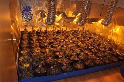 La Policía Nacional desmantela un cultivo de 90 plantas de marihuana en un piso de Ávila
