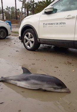 Delfín muerto en Dénia