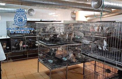 Protectoras de animales se hacen cargo de los 270 chihuahuas requisados por Policía y se personan en la causa judicial
