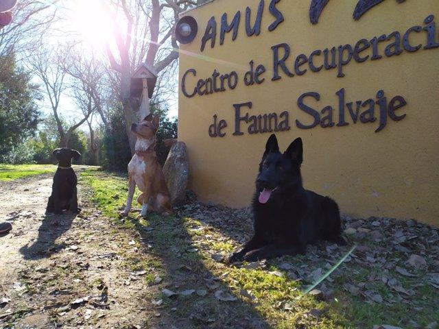 Perros en las instalaciones de Amus