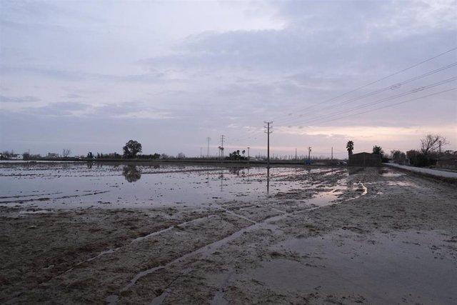 Zona propera a Riumar (Tarragona), al delta de l'Ebre, inundada por la borrasca Gloria