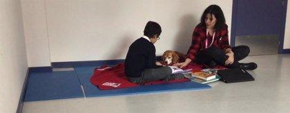 El Colegio CEU San Pablo de Sanchinarro (Madrid) inicia el proyecto de lectura con perros del programa R.E.A.D