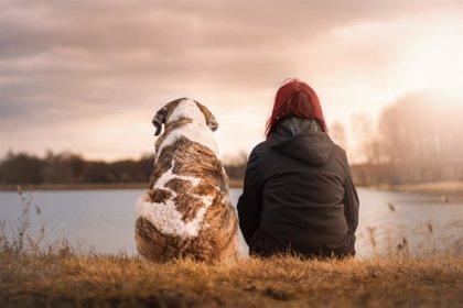 Las mascotas se registrarán como parte de la unidad familiar para proteger el vínculo con víctimas de violencia machista