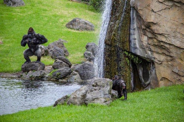 Algunos de los grandes primates de Bioparc