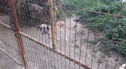 El Ayuntamiento de Vegas del Genil (Granada) denuncia a la propietaria de una parcela por dejar abandonados a dos perros