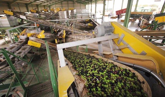 Producción aceite de oliva, exportaciones.