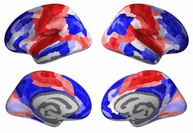 """Las regiones del cerebro rojo pertenecen al patrón """"conservador"""" del desarrollo adolescente, mientras que las regiones del cerebro azul pertenecen al patrón """"disruptivo"""""""