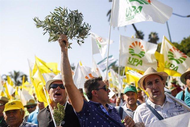 Manifestacion de olivareros de Andalucia (Foto de archivo).