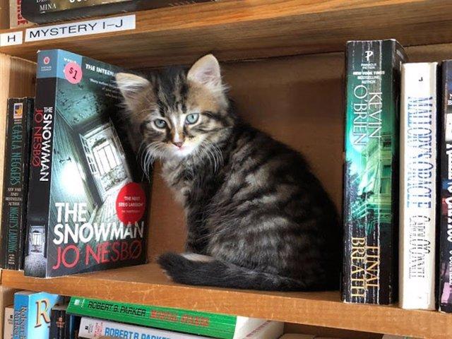 Un gato de Otis & Clementine's Books & Coffee