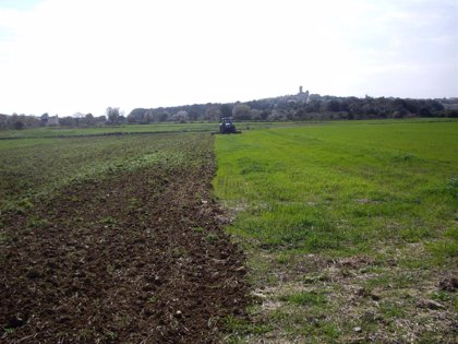El Fogaiba ejecuta el pago de 5,3 millones de euros del Programa de Desarrollo Rural en una semana