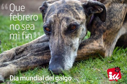 C-LM se suma a la protesta nacional para pedir una ley que proteja a los perros de caza