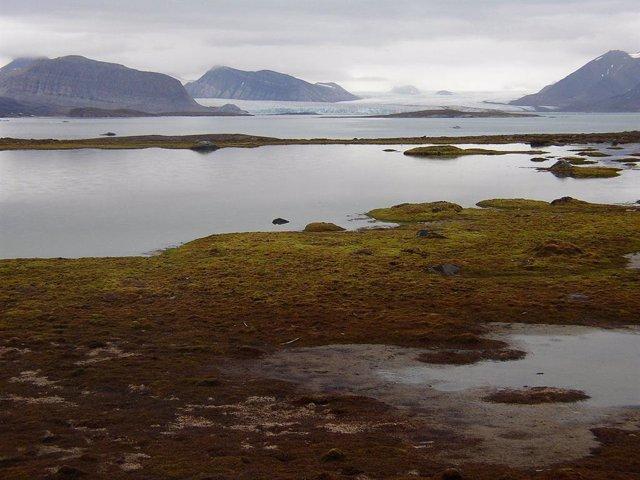 El Ártico en alerta a medida que el paisaje se hace más verde