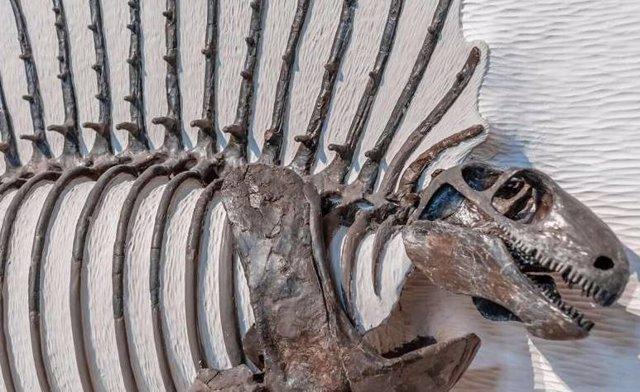 Cómo y cuándo cambiaron las espinas en la evolución de los mamíferos