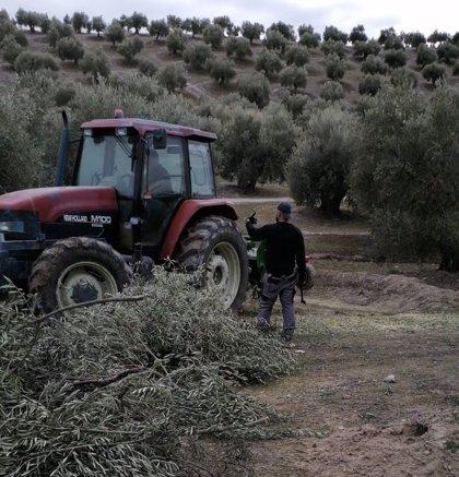 """PP de Jaén pide a Planas rebaja de módulos de IRPF a agricultores y medidas para el olivar: """"El sector no puede esperar"""""""