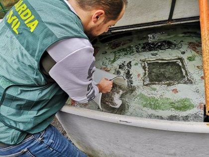 Guardia Civil requisa medio centenar de artes de pesca ilegales de angula en el Guadalquivir en una operación