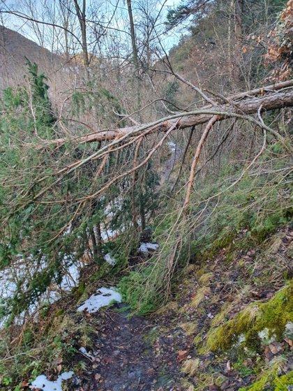 El Parc de l'Alt Pirineu finaliza las actuaciones urgentes por los daños del temporal 'Gloria'