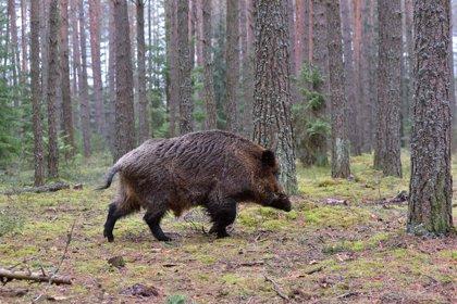 Animalistas denuncian que la Xunta entregó desde 2016 más de 145.000 euros a actividades de caza