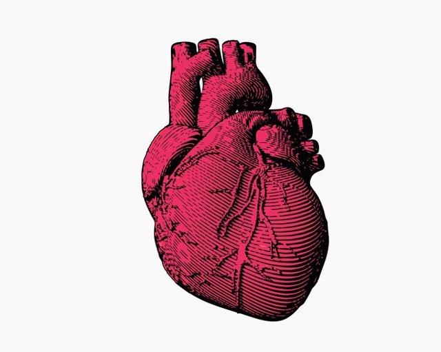 Engraving human heart illustration