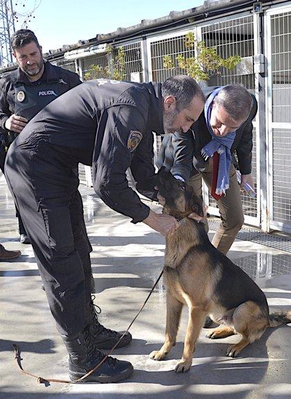 El perro policía 'Stan Lee' se dedicará a labores de terapia en hospitales y residencias de Granada