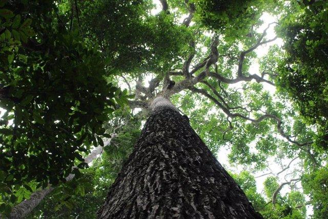 Nogal tropical en un parque nacional de Brasil