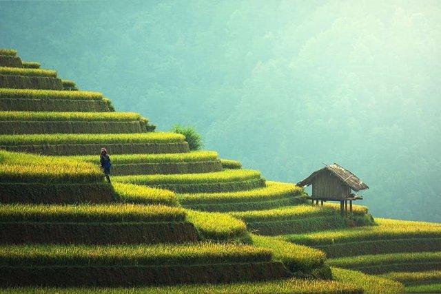 Un gen del arroz impulsa una 'revolución verde' más sostenible