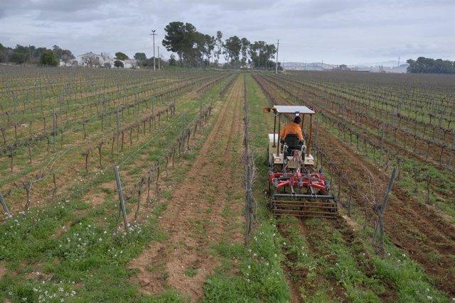 Família Torres assaja un tractor elèctric pioner a Europa per al vinyer