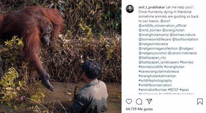 Un fotógrafo captura el momento en que un orangután tiende su mano para sacar del río a un guarda forestal en Borneo