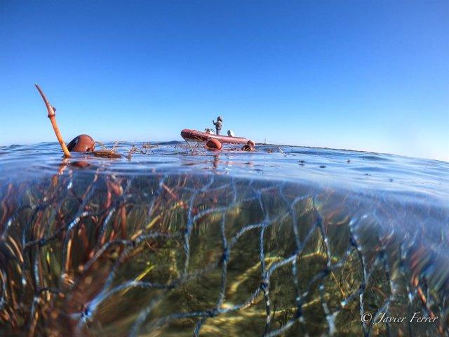 """ANSE denuncia nueva pesca ilegal en el Parque Regional Salinas de San Pedro y documenta la aparición de """"baba"""" en el Mar Menor"""