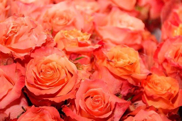 Flores, rosas, flor, ramo, adorno, plantas