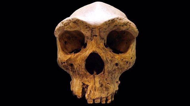 Rastros en ADN de una población fantasma de antiguos humanos en África